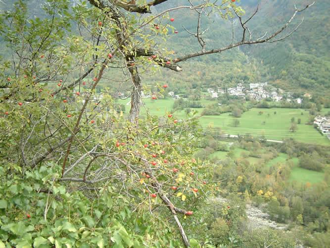 Carlo Magno e le Alpi
